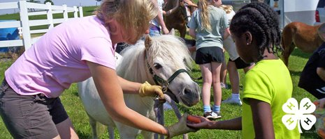 Woman Helps Little Girl Feed Pony
